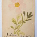 Doris Rose Grady postcard front