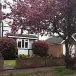 Pink tree, Aldershot