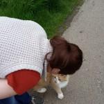 Ginger cat, Farnham Park
