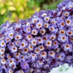 Flowers, Farnham