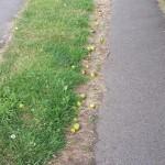 Fallen apples, Aldershot