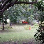 Tree cutting, Aldershot