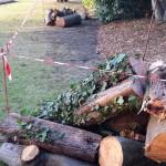 Cut wood, Manor Park, Aldershot