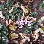 Autumn flowers, Farnham