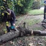 Tree surgery, Aldershot