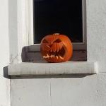 Pumpkin, Farnham
