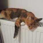 Sleeping cat, Bâcu, Romania