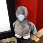 My Blue Nose Pigeon, Aldershot