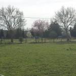 Fields, Badshot Lea