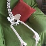 Skeleton, Farnham