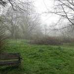 Fog over deer park, Farnham