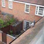 Rooftop pigeon, Farnham