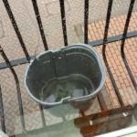Window cleaning, Farnham