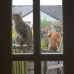 Neighbours' cats, Alton