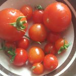 Home grown Tomatoes, Abergavenny