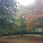 Autumn leaves, Aldershot