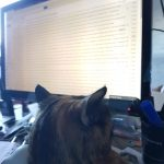 Cat using email, Alton