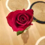 Rose, Alton