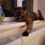 Radiator Cat, Alton