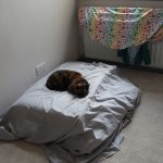 Cat on matress, Alton