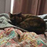 Unimpressed cat, Alton
