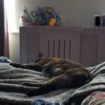 Chilled cat, Alton