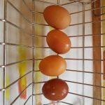 Coloured Eggs, Alton