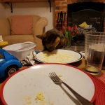 Cat eating cheese, Alton