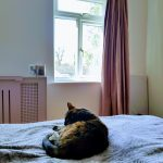 Cat on bed, Alton