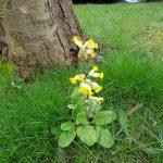 Spring flowers, Alton