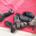 Puppies, Romania
