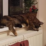 Cat on Radiator, Alton